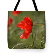 Beautiful Poppies 5 Tote Bag