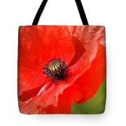Beautiful Poppies 6 Tote Bag