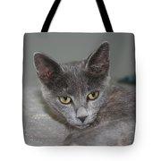 Beautiful Portait Of A Grey Russian Tabby Cat Tote Bag