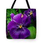 Beautiful Purple Pansies Tote Bag