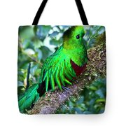Beautiful Quetzal 2 Tote Bag