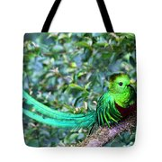 Beautiful Quetzal 3 Tote Bag