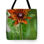 Beautiful Shades Of Brown  Tote Bag