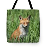 Beautiful Vixen Tote Bag