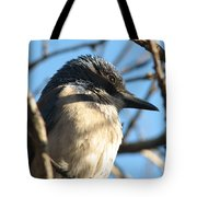 Beautiful Western Scrub Jay Tote Bag