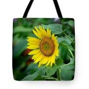 Beautiful Yellow Sunflower In Full Bloom Tote Bag
