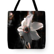 Beauty In The Woods Tote Bag