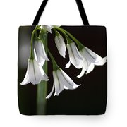 Beauty Of The Snowdrops Tote Bag