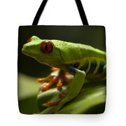 Beauty Of Tree Frogs Costa Rica 3 Tote Bag