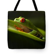 Beauty Of Tree Frogs Costa Rica 7 Tote Bag