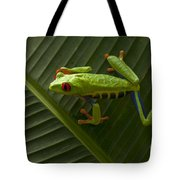 Beauty Of Tree Frogs Costa Rica 8 Tote Bag