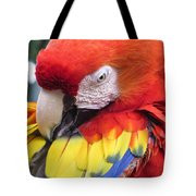Beauty Scarlet Tote Bag