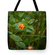 Beauty Under Our Feet Tote Bag
