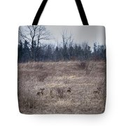 Bedded Whitetail Deer Tote Bag