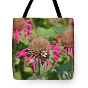Bee Balm 5 Tote Bag