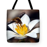 Bee Fly And Bloodroot Tote Bag