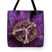 Bee On Passion Flower Brazil Tote Bag by Pete Oxford