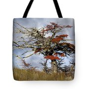 Beech Tree, Chile Tote Bag