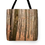 Beech Wood In Autumn Tote Bag