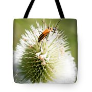 Beetle On White Spiky Wild Flower Tote Bag