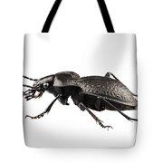 Beetle Species Carabus Coriaceus Tote Bag