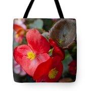 Begonia 20140706-1 Tote Bag