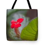 Episcia Flower Tote Bag
