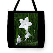 Bellflower - Campanula Carpatica Tote Bag