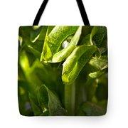 Bells Of Ireland Plant Tote Bag