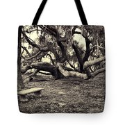 Bench And Trees Bw Tote Bag