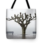 Benches And Tree Tote Bag