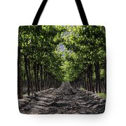 Beneath The Vines Tote Bag