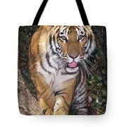 Bengal Tiger By Tree Endangered Species Wildlife Rescue Tote Bag