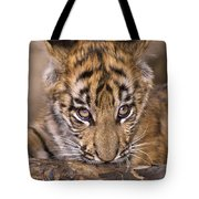 Bengal Tiger Cub And Peacock Feather Endangered Species Wildlife Rescue Tote Bag