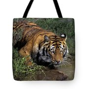 Bengal Tiger Drinking At Pond Endangered Species Wildlife Rescue Tote Bag