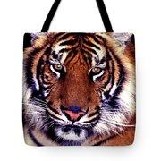 Bengal Tiger Eye To Eye Tote Bag