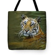 Bengal Tiger In Water Native To India Tote Bag