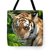 Bengal Tiger Portrait Tote Bag