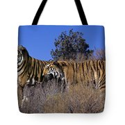 Bengal Tigers On A Grassy Hillside Endangered Species Wildlife Rescue Tote Bag