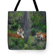 Bengal Tigers On Grassy Hillside Endangered Species Wildlife Rescue Tote Bag