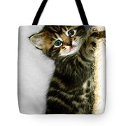Benny The Kitten Playing Tote Bag