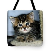 Benny The Kitten Resting Tote Bag