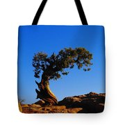 Bent By The Wind Tote Bag