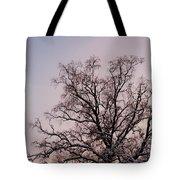 Bergen  Winter Tree Tote Bag by Hakon Soreide