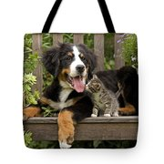 Bernese Mountain Puppy & Kitten Tote Bag