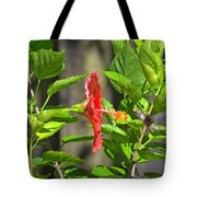 Best Close-up Green Hummingbird On Red Hibiscus Flower. Tote Bag