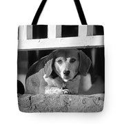 Beware - Guard Beagle On Duty In Black And White Tote Bag by Suzanne Gaff