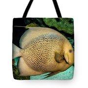 Big Beautiful Fish Tote Bag