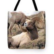 Big Bighorn Ram Tote Bag