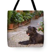 Big Black Schnauzer Dog In Italy Tote Bag